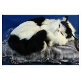 Black and white cat on cushion