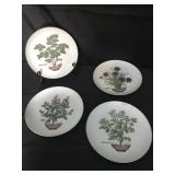 Set of 4 Decorative Plates - Herbs