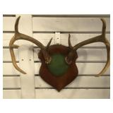 Mounted 4-point antlers on hanging wall plaque
