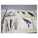 Mid century Ray Harm tropical bird prints