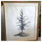 INDECERNIBLE, GRAPHITE DRAWING OF TREE, 1964