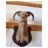 Monted Ram head