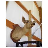 Monted Deer head