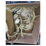 Box w/Deer Antlers
