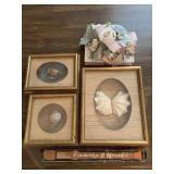 framed sea shells & Cambridge II recorder