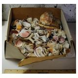 LOT - Box of Seashells