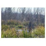 North Texas Hunting Property, DUCKS, Deer, Hogs