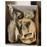 Rock/ Fossils
