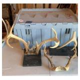 Box of antlers