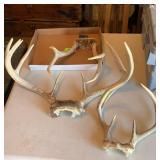 Box of deer antlers