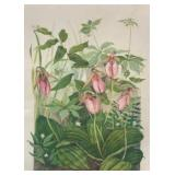 """""""Pink Lady Slippers"""""""