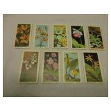 Red Rose Tea Cards Wildflowers of North America