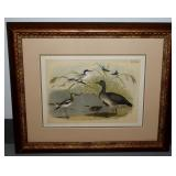 Audubon Print Framed P1 LXL
