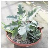Assorted Succulent Planter