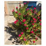 903 - FLOWERING PLANT IN POT