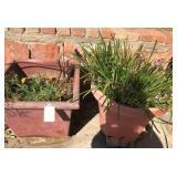 903 - 2 OUTDOOR PLANTS