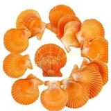 "*butterfunny 2 Pack 2""-3.2"" Scallop Shell Natural"