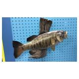 Smallmouth Bass Taxidermy Mount