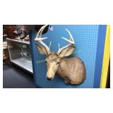 8 Point Whitetail Deer Mount Taxidermy