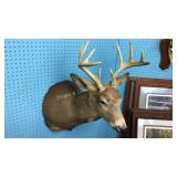 10 Point Whitetail Deer Taxidermy Mount