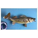 Walleye Fish Taxidermy Wall Mount