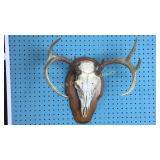 9 Point Deer Skull Wall Mount