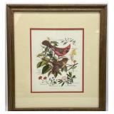 Arthur Singer Cardinal & Floral Art Print