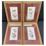 4pc Carolyn Shores Wright Hummingbird Art Prints