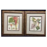 Pair Botanical Fantasy Framed Art Prints
