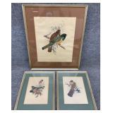 3pc J. Gould Bird Lithograph Prints