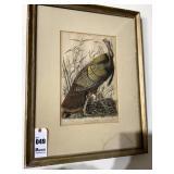 Old Audubon Society Turkey Picture Print