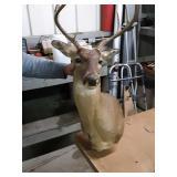 Buck deer mount
