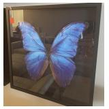 "BUTTERFLY ART BLACK FRAME 27"" X 27"""
