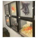 GOLDFISH 3D ART ASSORTED 20 X 20