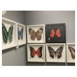 3 D Butterfly Art 6 white 2 black 19 x 19 each
