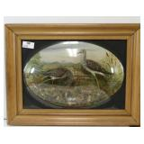 Antique Framed Bird Diorama With Bubble Glass.