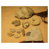 11 Fossilized Pieces