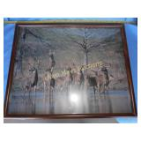 Framed Whitetail Deer Large Photo Print