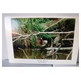 "24""x36"" Wood Duck PhotoGraph"