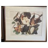 J.J. Audubon Off-Set Print Framed 30x25