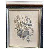 J.J. Audubon Off-Set Print Framed 22x18