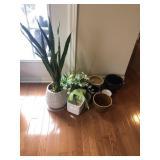 Live Plant And Plant Pots