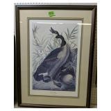 Jj Audubon Canadian Goose Framed Print