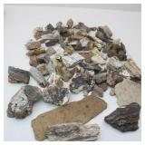 Petrified Wood Specimen Collection