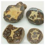 Septarian Rock Chunk Slabs