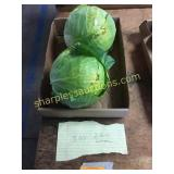 Green cabbage(2)