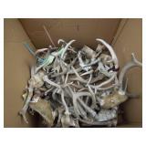 Box of Assorted Deer Antlers