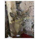 8 pt. Deer Mount