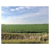 87.7 Surveyed Acres, Sec. 18, Clay County, IA