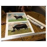 4 Murphy Angus prints
